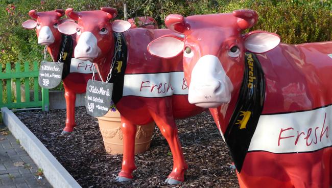 Koeien P1000388