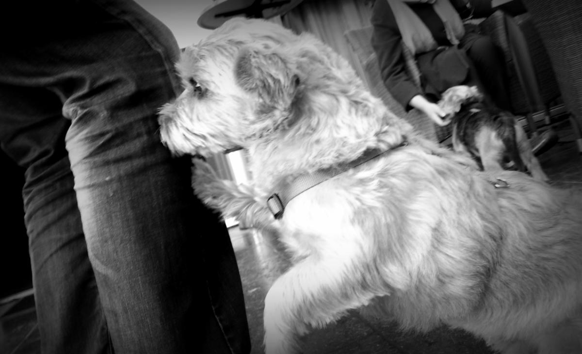 Op zoek naar Sacha Kahn – 1 – Despeurhond